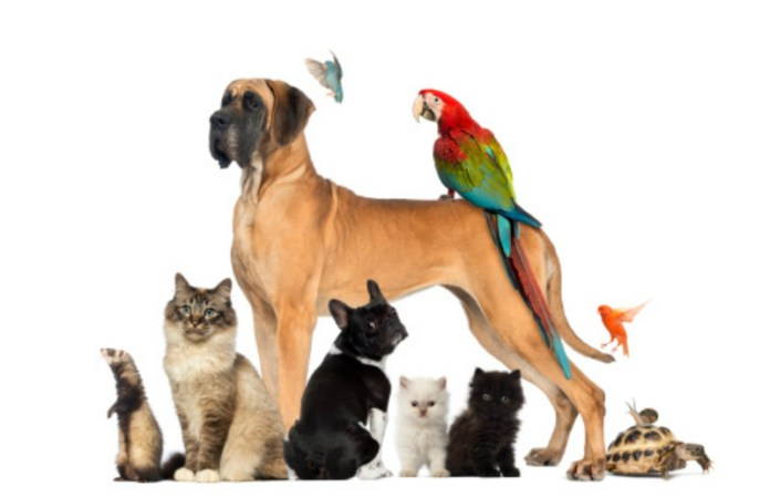 5 ways you didn't know your pet was keeping you healthy