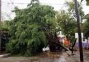 Retiran ramas y árboles caídos en Morelia.