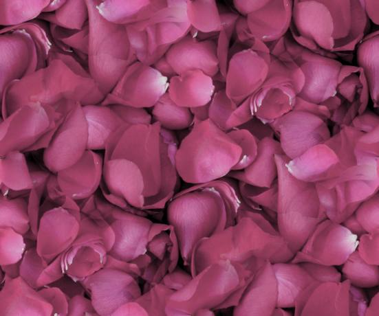 What Is Falling Action Of The Yellow Wallpaper Rose Petals Seamless Backgrounds