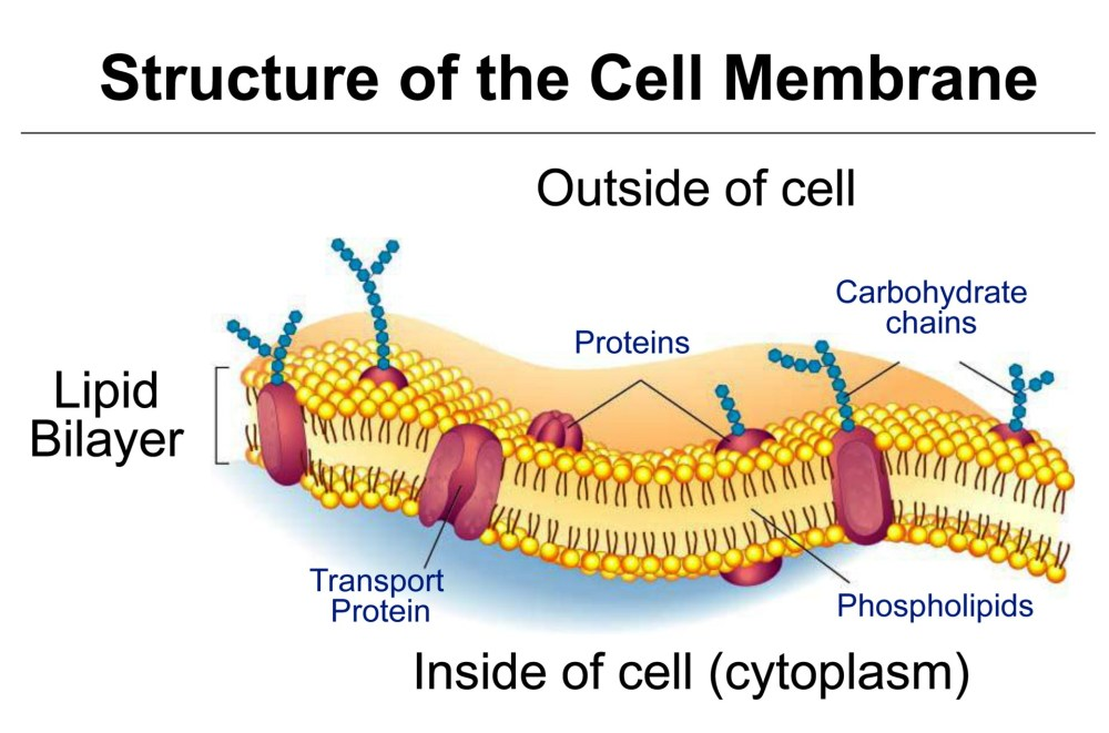 medium resolution of cell structure and function unit 5