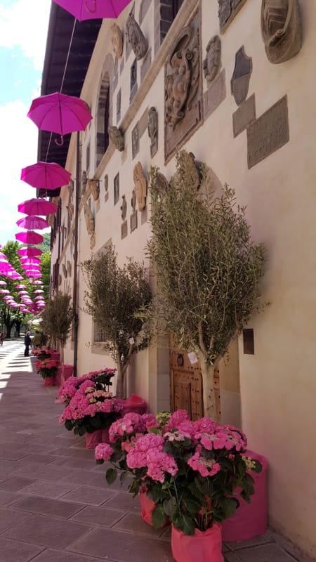 Giro dItalia misterioso imprenditore dona fiori rosa per abbellire i monumenti