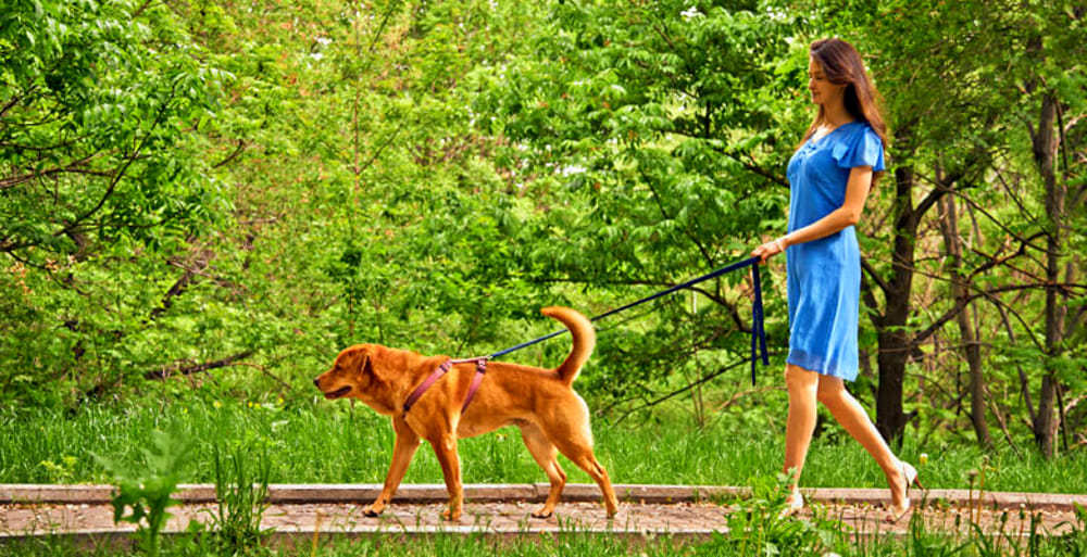 Il 26 Maggio Passeggiata E Cena Con I Cani Per Beneficenza