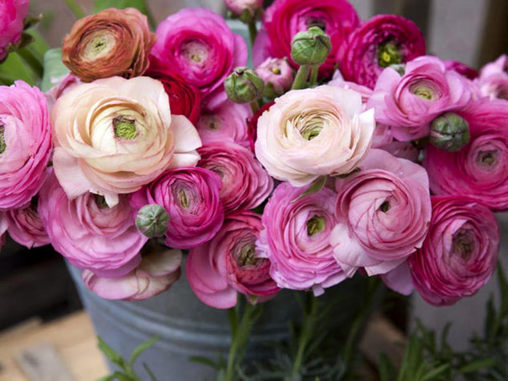 Mostra mercato di fiori e artigianato un tuffo nella