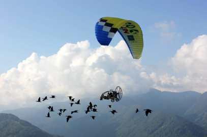 Risultati immagini per ibis parco natura viva