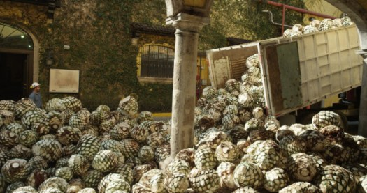 Agave – used to make tequila – provides a new source of material in the form of its fibers for Ford's biomaterials program.