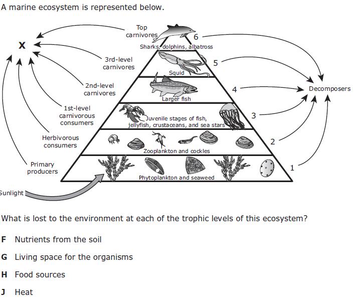 Biology - TEK 12C Energy Flow Practice