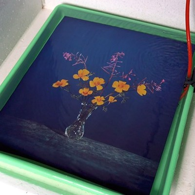 Video: Brendan Barry makes 20″ x 24″ wildflower image using camera obscura and color reversal process