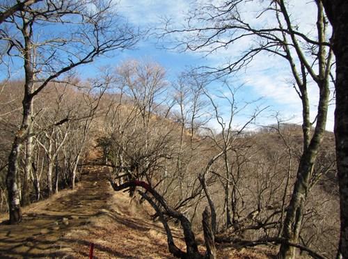 丹沢「鍋割山」(県民の森よりピストン)
