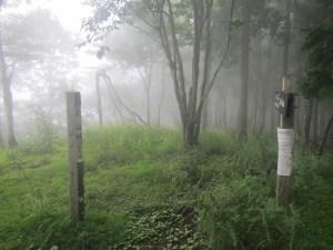 丹沢「雨山」