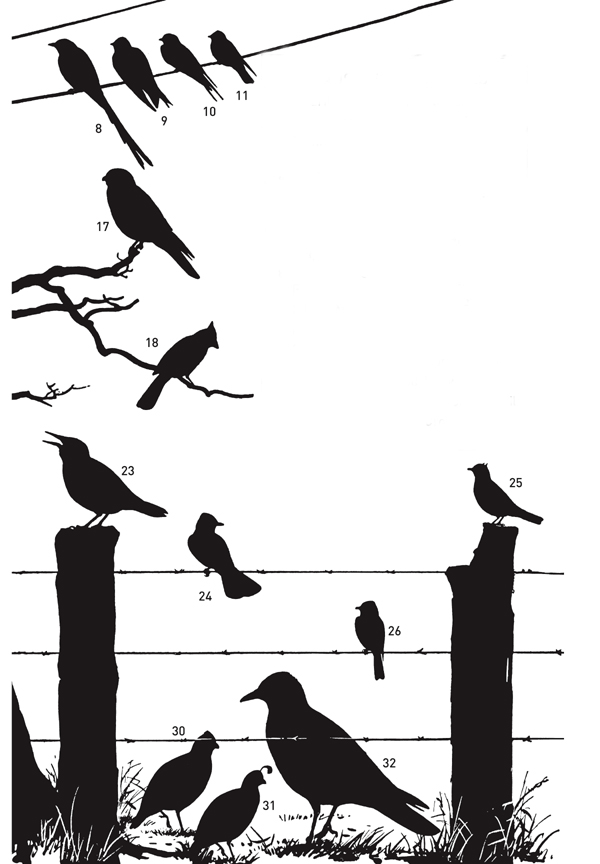 10,000 Birds Perceptive Peterson Field Guide Giveaway