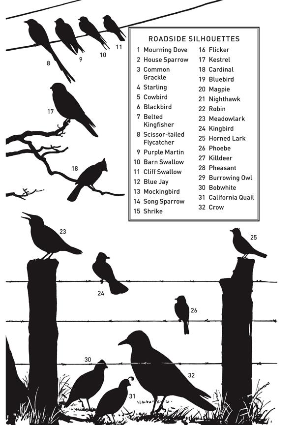 10,000 Birds Perceptive Peterson Guide Giveaway Winner