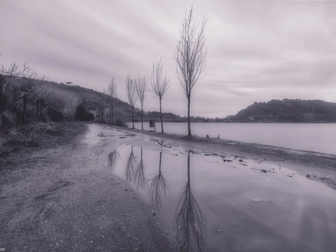 background, black, calm, fog, isolated, lake, landscape, lonely, morning, nature, new, peaceful, reflection, shore, sky, travel, tree, wallpaper, water, white, winter