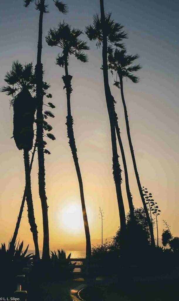 Angeles, California, Los, Monica, Santa, america, backlit, beach, coast, dawn, evening, landmark, landscape, los angeles, ocean, outdoors, pacific, palm, santa monica, santa monica beach, silhouette, sky, sunset, tree, usa