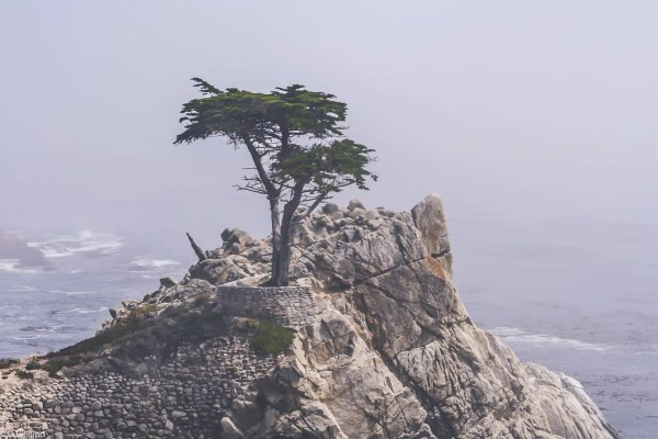 California, Cypress, Lone, Monterey, american, coastal, landscape, monterey county, nature, ocean, scenic, seashore, travel, tree, usa