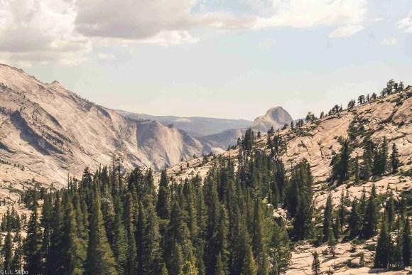 California, Yosemite, america, beautiful, capitan, conifer, el capitan, landmark, landscape, mountain, national, nature, outdoors, park, rock, scenic, travel, valley, wood, yosemite national park
