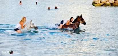 Swimming with Horses 3