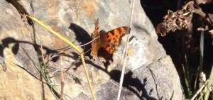1000Butterflies.ca - butterfly lake Louise