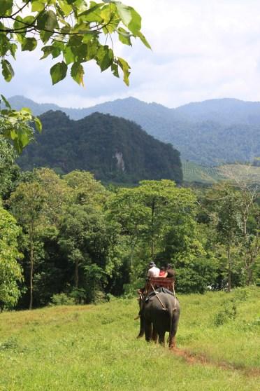 Thailand Rain Forest