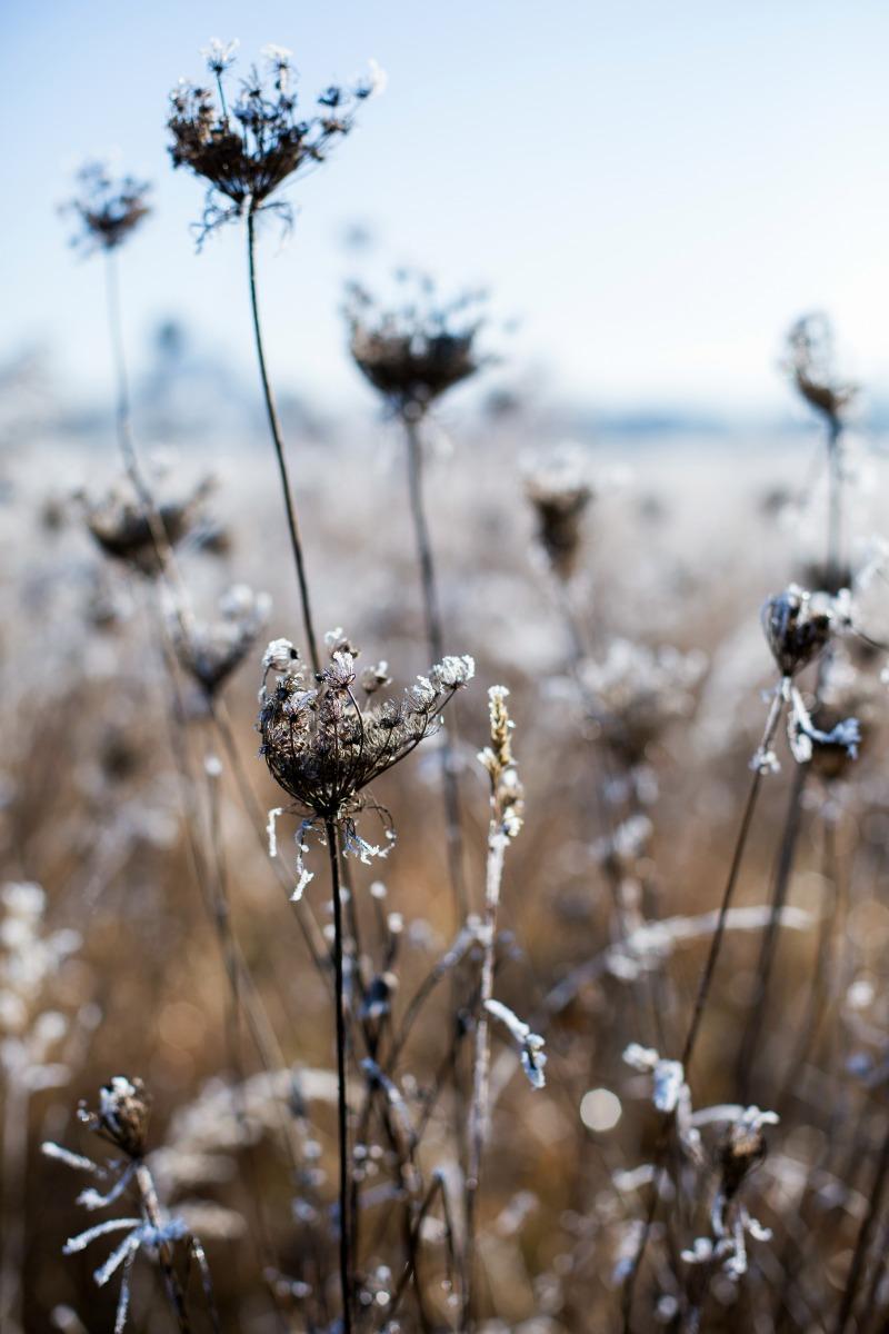 winter-8