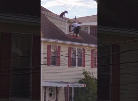 屋根に上がってしまったワンちゃんを連れ戻そうとする男性にヒヤヒヤする動画。