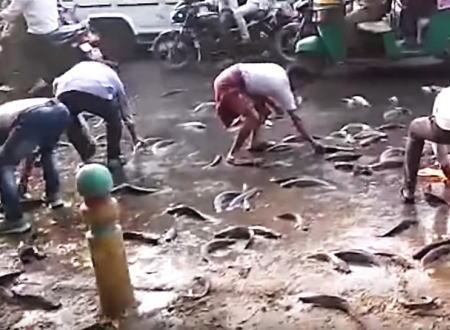道路にばら撒かれた生きた魚を持ち帰ろうと群がる人たち。リュックサックには入れんなよwww