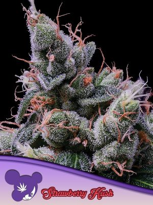 Strawberry Kush Anesia Seeds