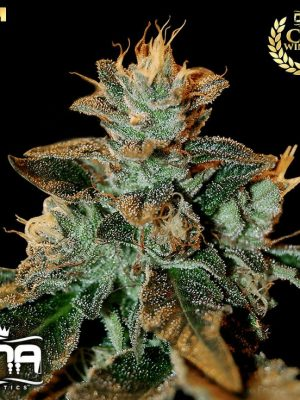 Cataract Kush (DNA Genetics), 3 feminisierte Samen