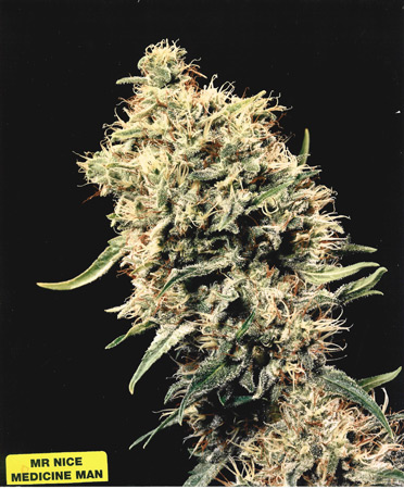 Medicine Man (Mr. Nice) 15 regular Seeds