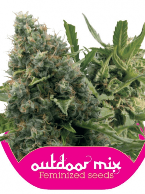 Outdoor Mix (Royal Queen Seeds), 10 feminisierte Samen