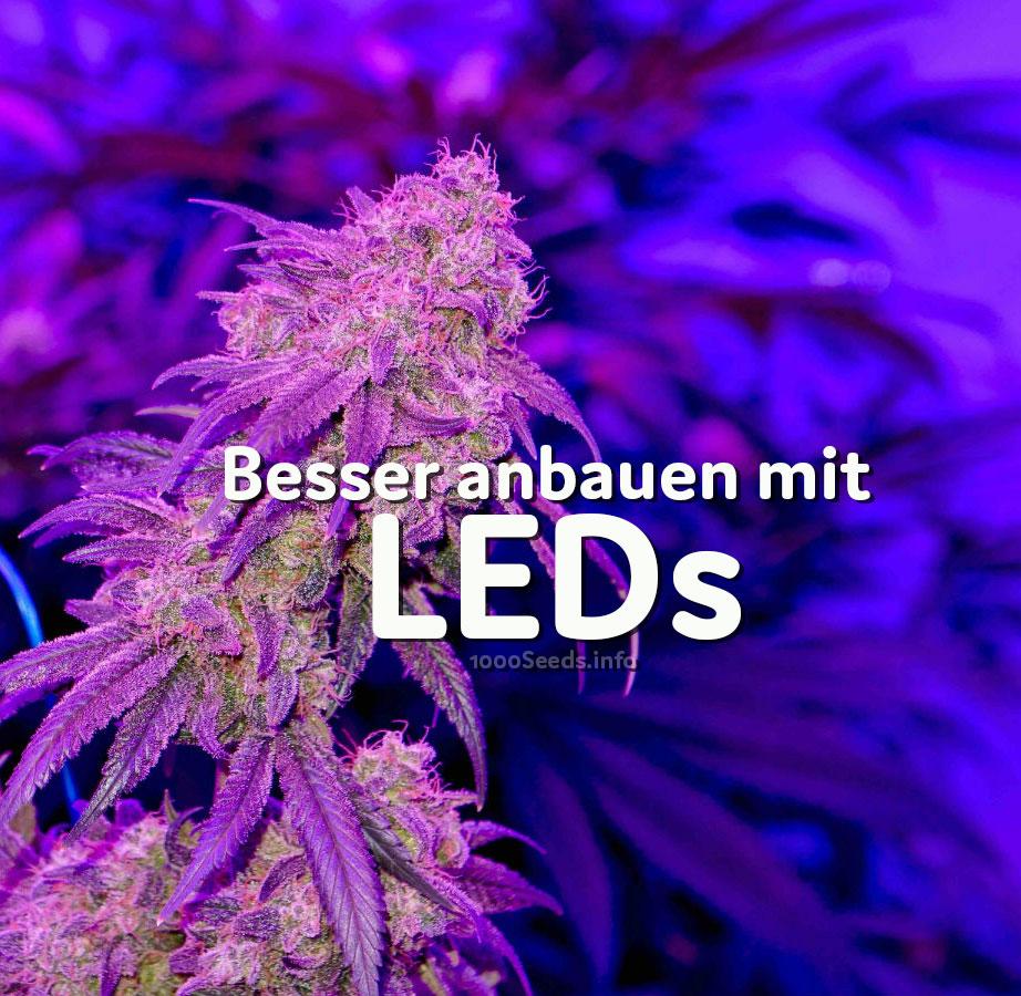 welche lampen für indoor grow
