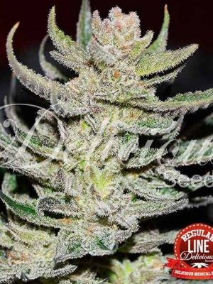 Desconocida Kush von Delicious Seeds