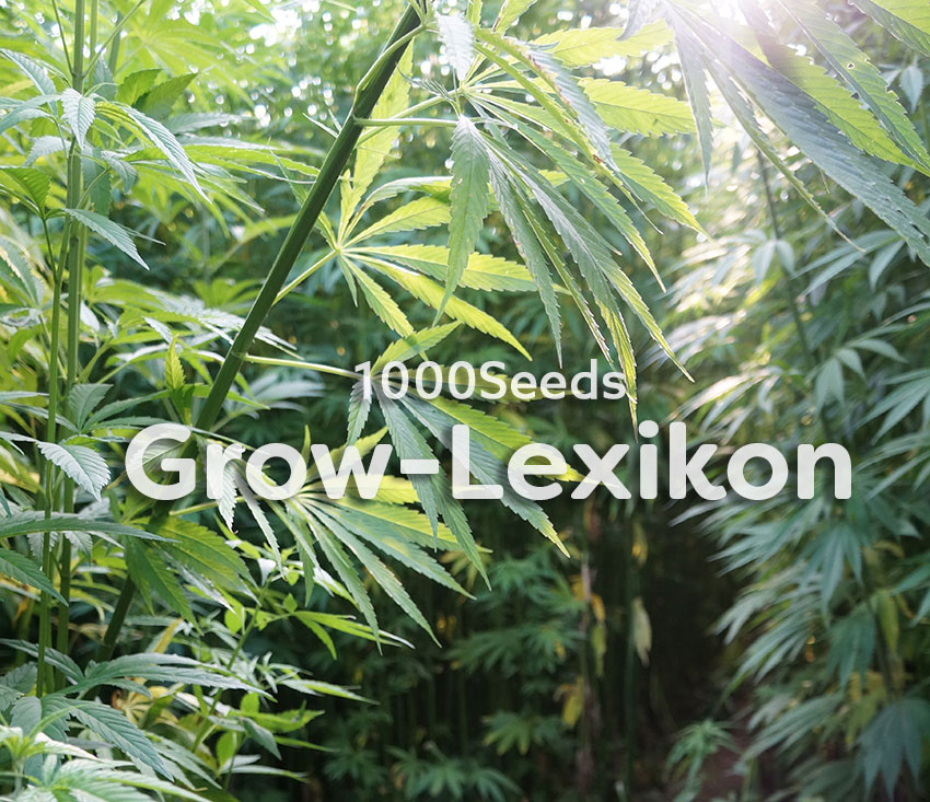1000Seeds-das-Grow-Lexikon