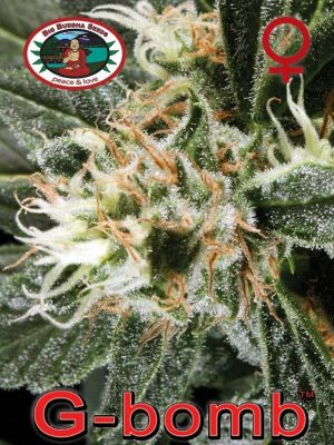 G-Bomb von Big Buddha Seeds