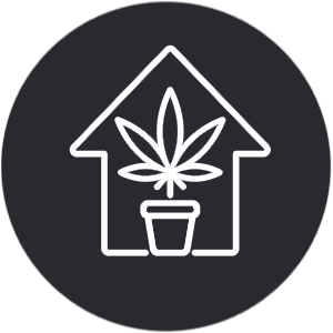 Indoor Cannabisanbau
