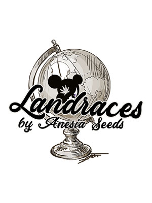 Landraces-by-Anesia