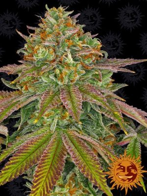 Wedding Cake von Barneys Farm