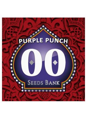 Purple-Punch-00Seeds