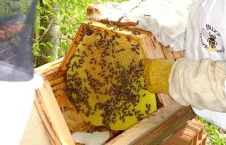 Stage apiculture naturelle