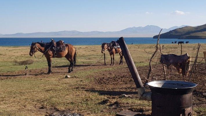Auf ungebremsten Pferden