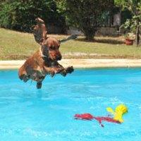 Europaweiter Trend: Nicht ohne mein Haustier in die Ferien