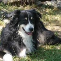 Herbst – beste Zeit für Hundeurlaub