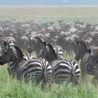 Wayne Carpendale auf Safari im Phinda Private Game Reserve
