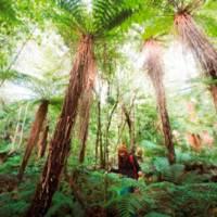 Neuseeland führt elektronische Reisegenehmigung (ETA) ein