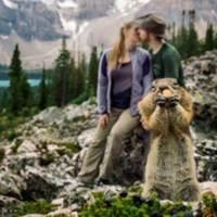 Tierische Fotobombe im Banff National Park
