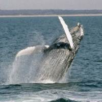 """Winterliches """"Whale Watching"""" in Virginia Beach"""