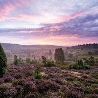 Von bunten Heidekartoffeln, Lama-Trekking und anderen Kuriositäten der Lüneburger Heide