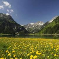 Der Frühling im Tannheimer Tal erstrahlt im satten Gelb