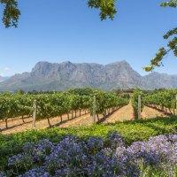 Kulinarisches Südafrika – Genusstipps