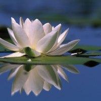 Blumen blühen im Wasser – und in der Erde von Bad Hévíz