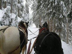 Pferdeschlittenfahrt Katschberg©Detlef Düring